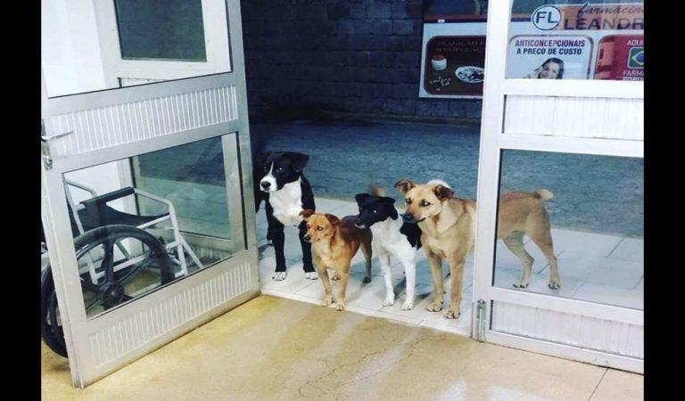 Cuatro perros esperan a su dueño, un hombre sin hogar, en la puerta de un hospital en Brasil